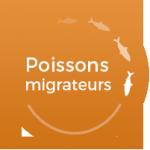 PM_poissons_migrateurs