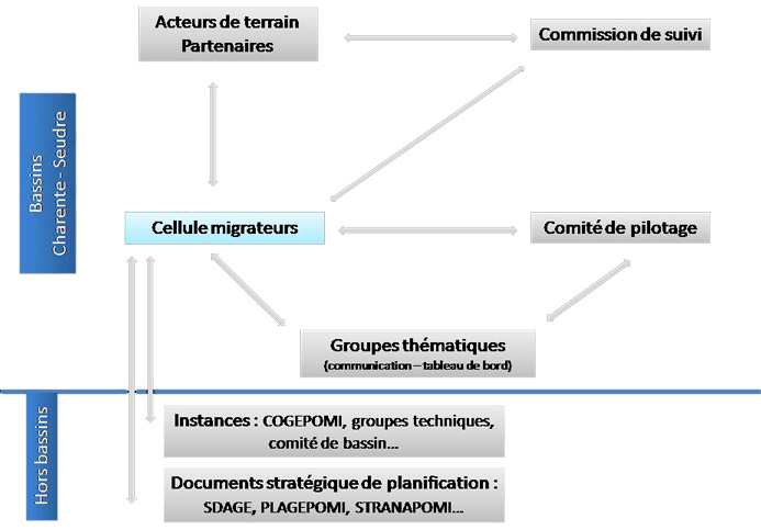 organisation_cellule_migrateurs
